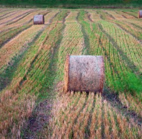 Harvested fieldsjpg