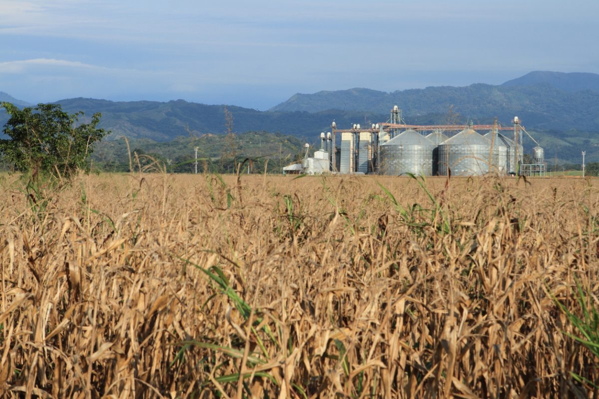 The Future of Agro-industry in Latin America